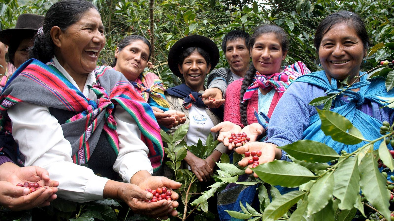 A group of female coffee growers